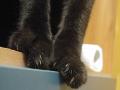 Furia's cat <3